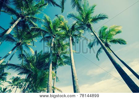 Retro Palm trees image
