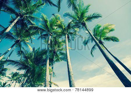 Retro Palm trees image