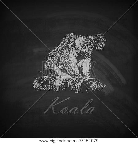 vector illustration of a chalk koala bear on the blackboard texture