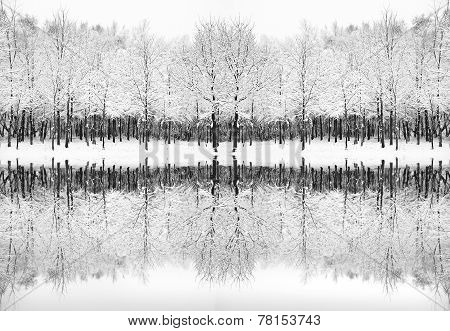 Beautiful Snow And Frost Covered Trees Winter Landscape Reflected In Frozen Lake