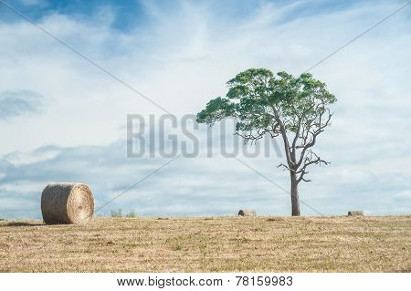 In The Hay Field