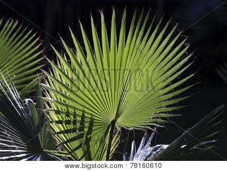 Palm leaves with shadow