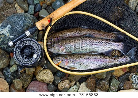 Trout Inside Landing Net
