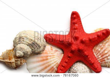 Seastar And Seashells