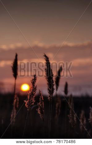 Plant in sunset