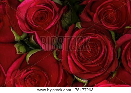 Close Up Of A Bunch Of Red Roses Viewed From Above