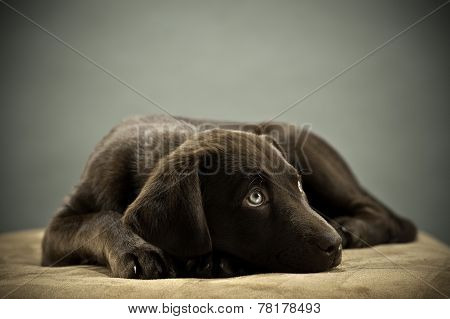 puppy thinking