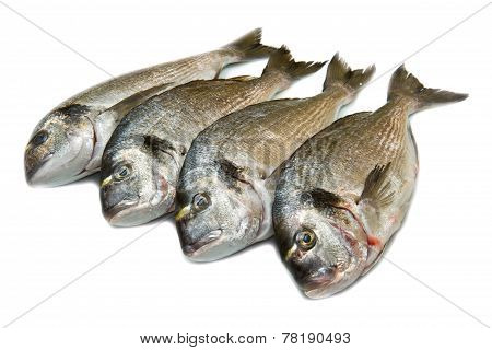 Group Of Sea Bream