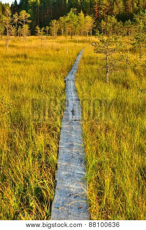 Traditional wooden path on finland swamp.