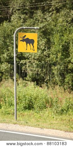 Road sign attention elk