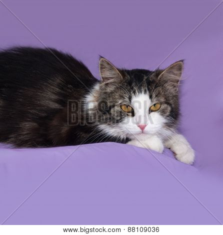 Fluffy Tabby And White Cat Lying On Lilac