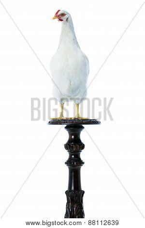 Hen On Pedestal