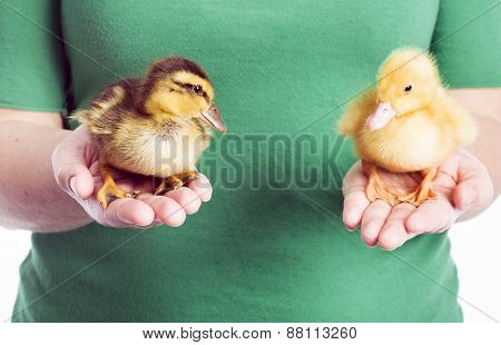 Holding Two Ducklings