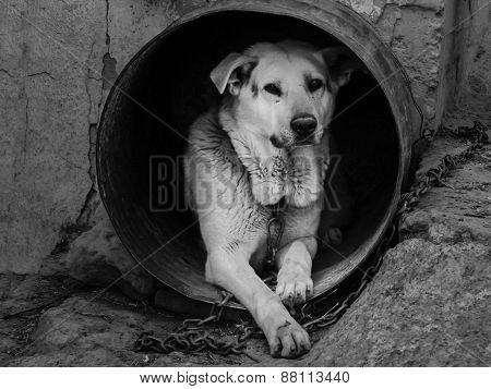 Dog As Slave