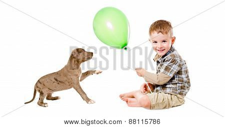 Happy boy and puppy pit bull playing with a balloon