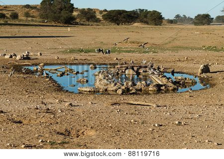 Waterhole At Kgalagadi