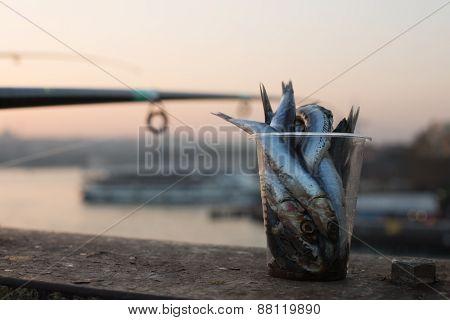 fish bait, Galata Bridge, Istanbul, Turkey