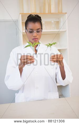 Scientist looking at sprouts in test tube in laboratory