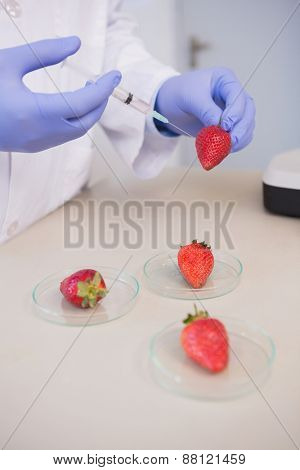 Scientist injecting strawberry in the laboratory