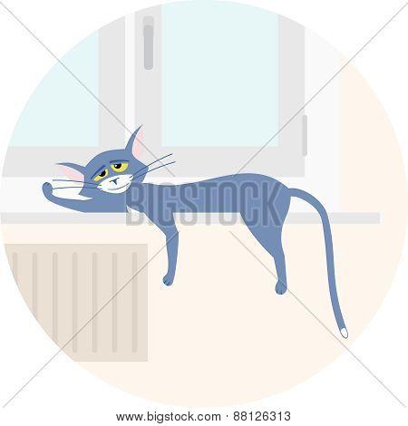 Cat Sleeping On The Windowsill
