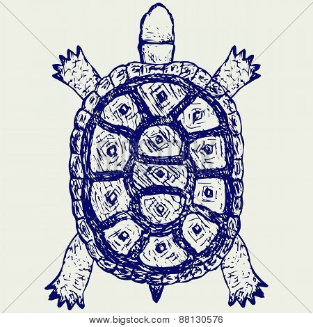 Land turtle. Testudo hermanni