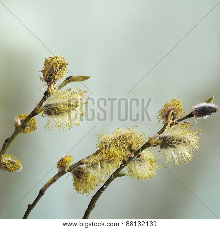 Buds On Twigs