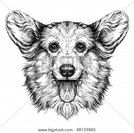 Funny Pembroke Welsh corgi dog.