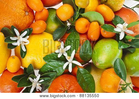 Beautiful citrus fruits mixed close up  top view background