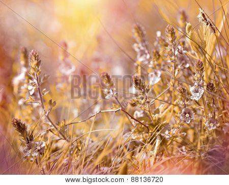 Meadow flowers - meadow in spring