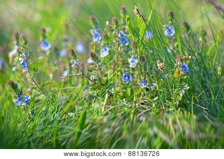 Spring in meadow