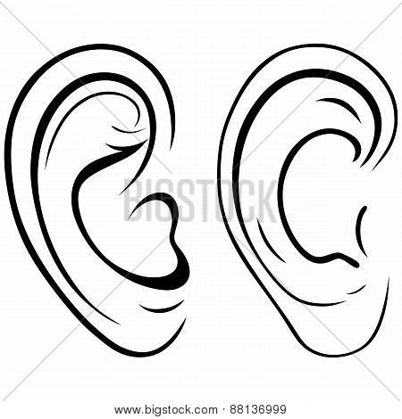 Drawing human ear