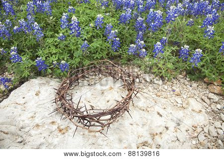 Crown Of Thorns On Rock Beside Texas Bluebonnets