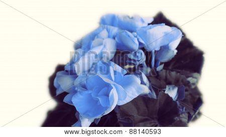 Mothers Day Flower Bouquet Celebration
