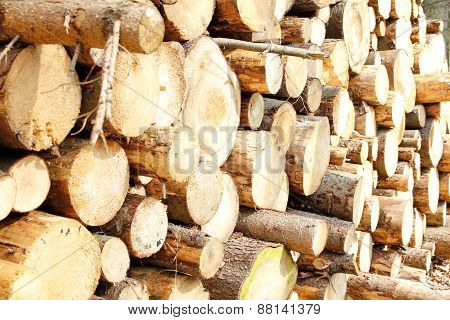 Pile Of Logs