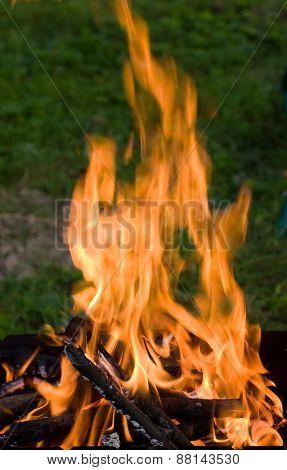 Camping Bonfire In Dark