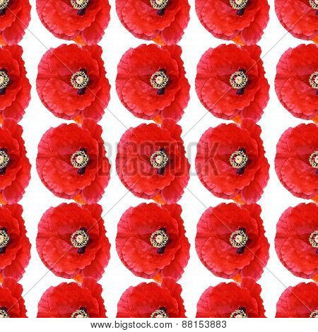 Seamless Pattern 4 Poppies