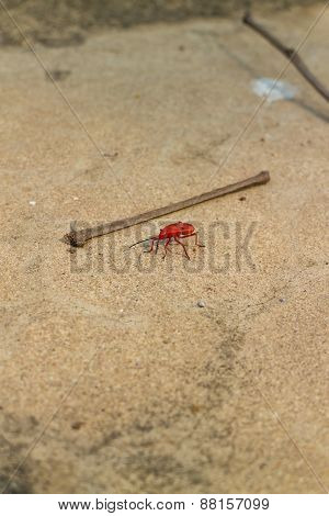 The red bug standing near the piece of wood