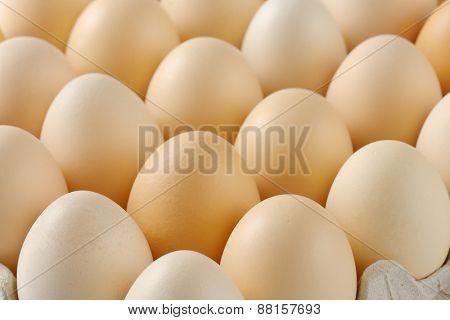 detail of fresh eggs in rows