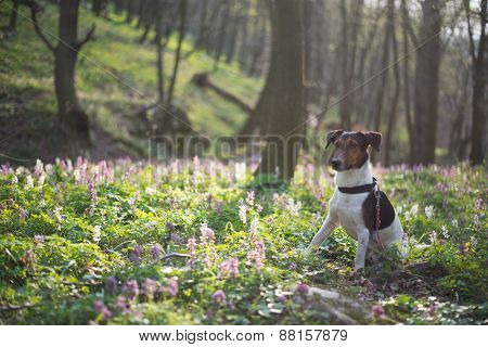 Cute dog exploring nature