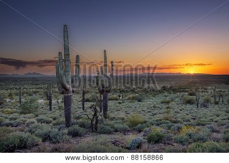 Sunset Over The Phoenix Valley In Arizona