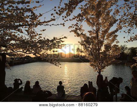 Goodnight Washington DC