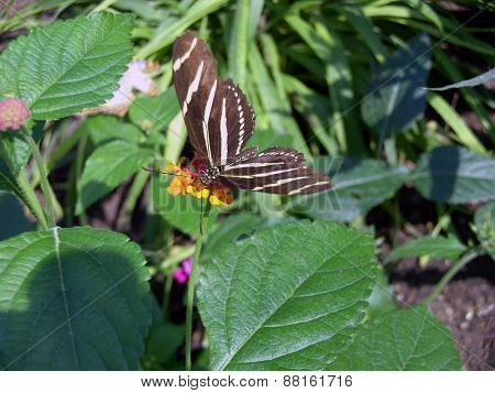 A Striped Butterfly on a Yellow Flower