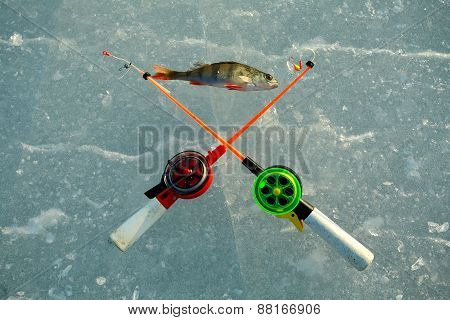 Perch And Two Fishing Rods