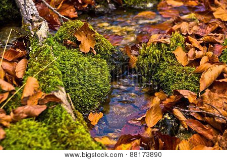 Tiny water stream through moss and fallen leaves at autumn, Radocelo mountain