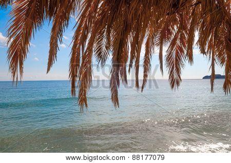Palm Leaf Arbor I