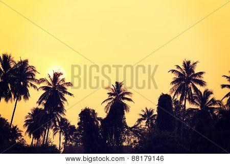 coconut tree under sunrise