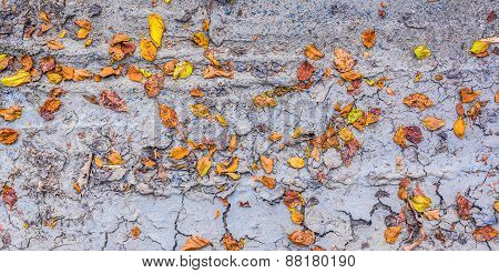 Dry Brown Leaf On The Cracked Earth, Drought Land
