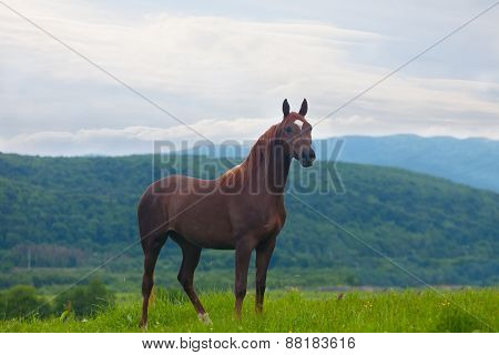 Beautiful Bay Horse To Stand Against Mountains