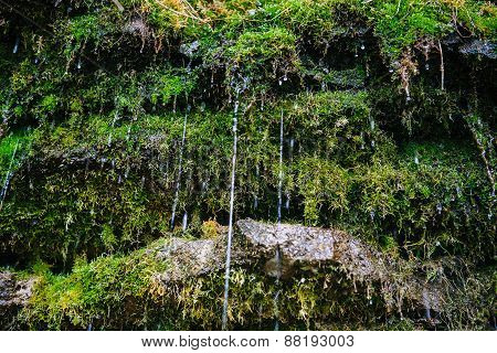 Moss on the rock with water jets