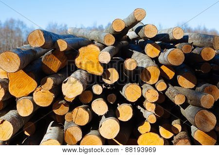 Tree trunks at the sawmill